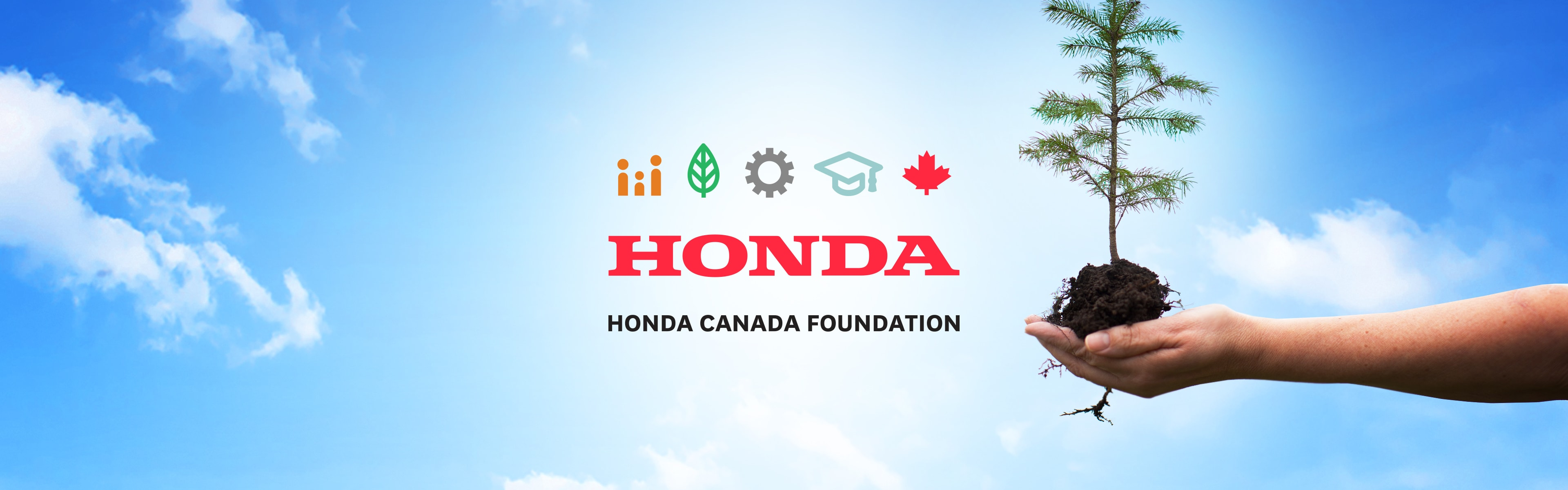 One Honda Tree With The Support Of Forest Recovery Canada